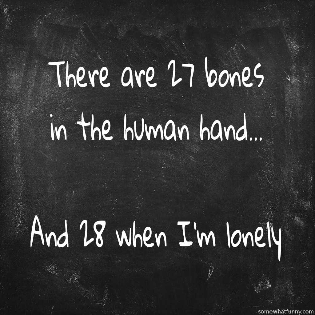 There are 27 bones i...
